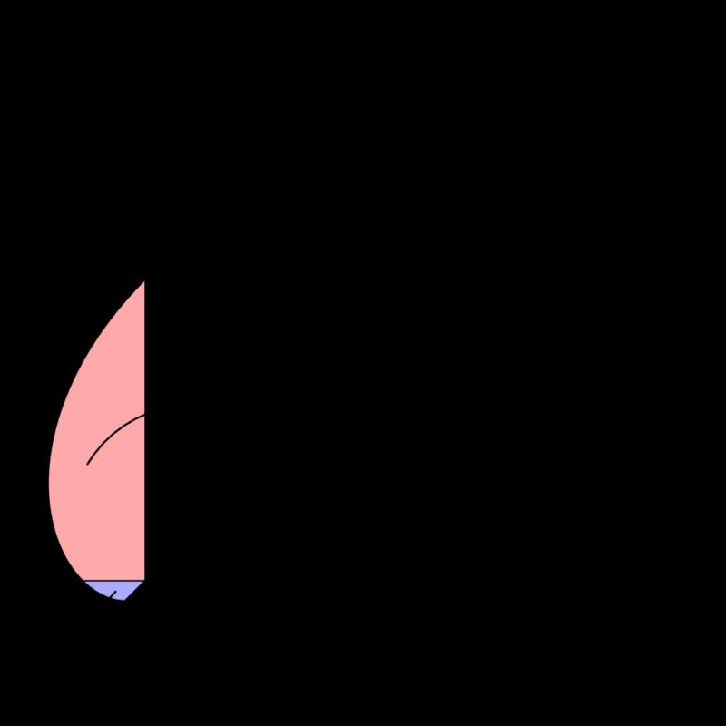 2018年 東京理科大 対数螺旋 等角螺旋 面積